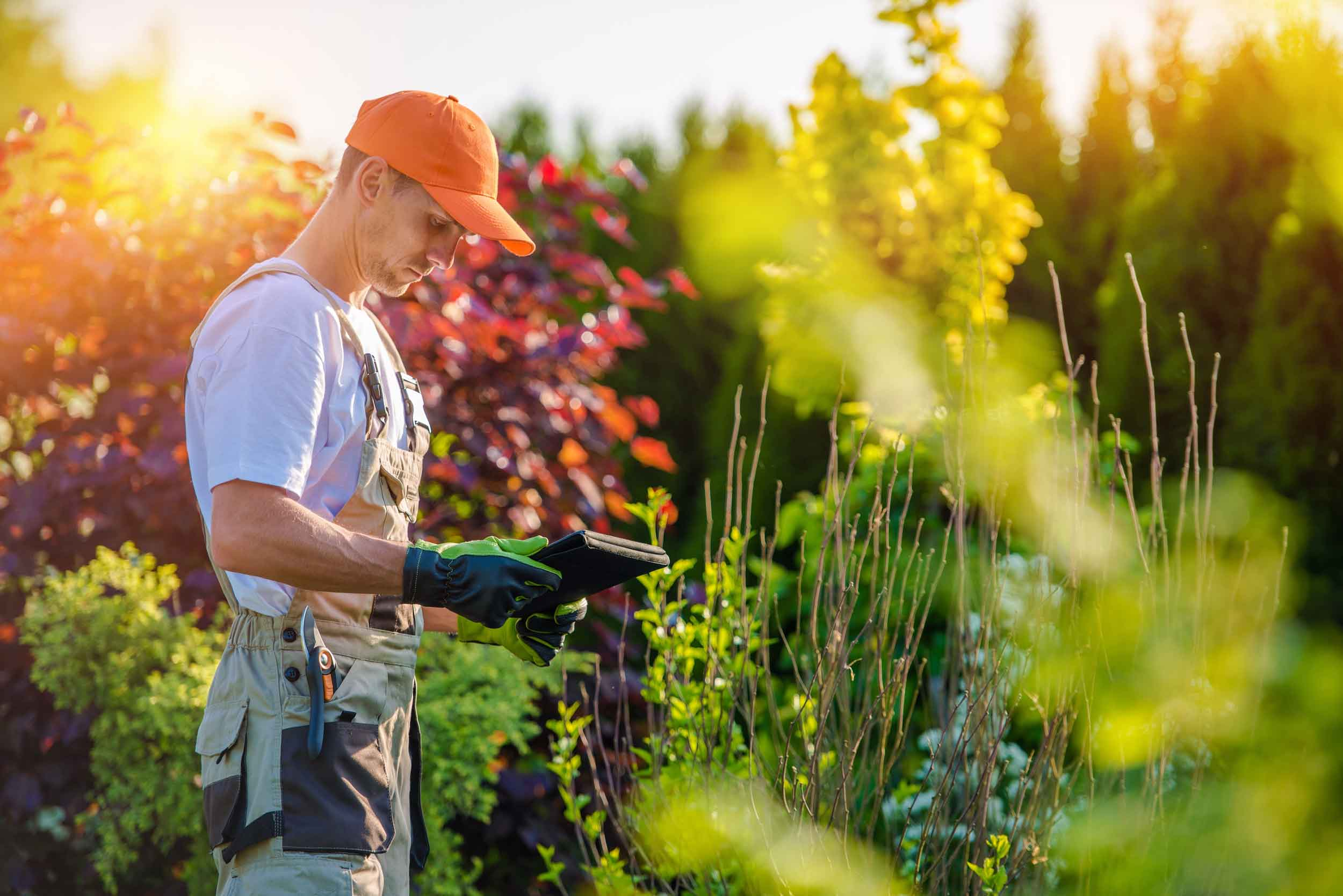 Altitude-Landscaping-Services-Maintenance-Services