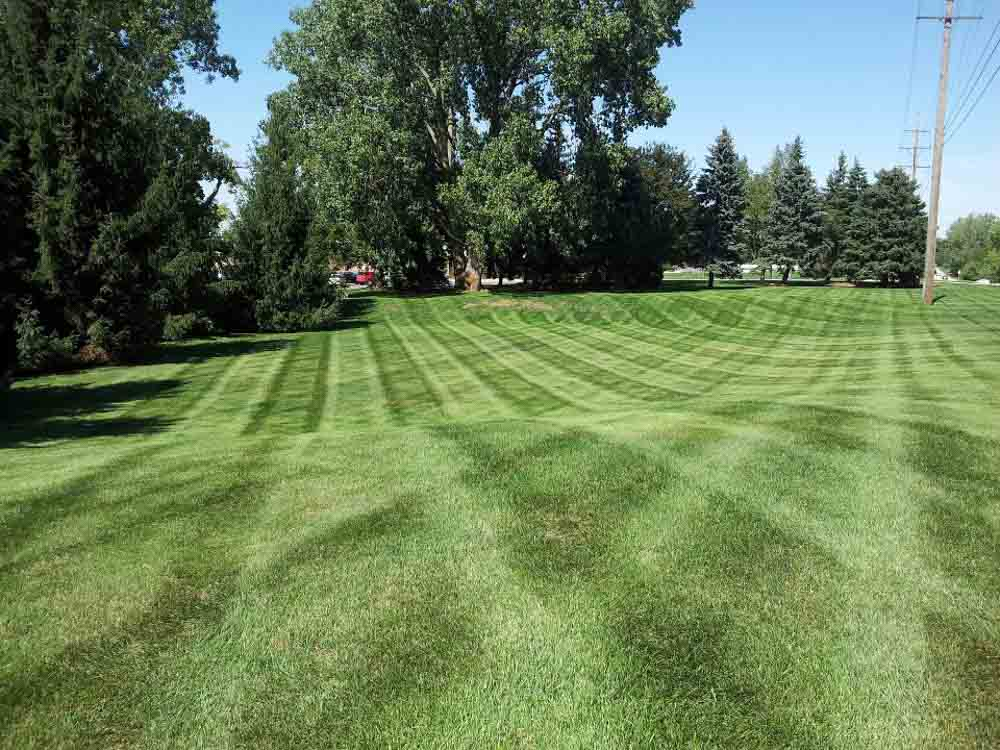 Altitude-Landscaping-Services-Lawn1