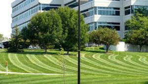 Altitude-Landscaping-Services-Lawn2