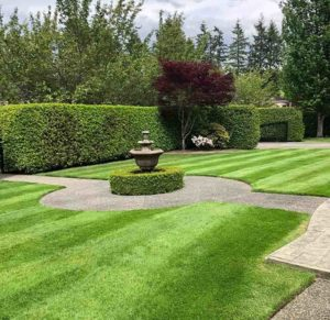 Altitude-Landscaping-Services-Lawn7