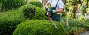Altitude-Landscaping-Services-Maintenance5